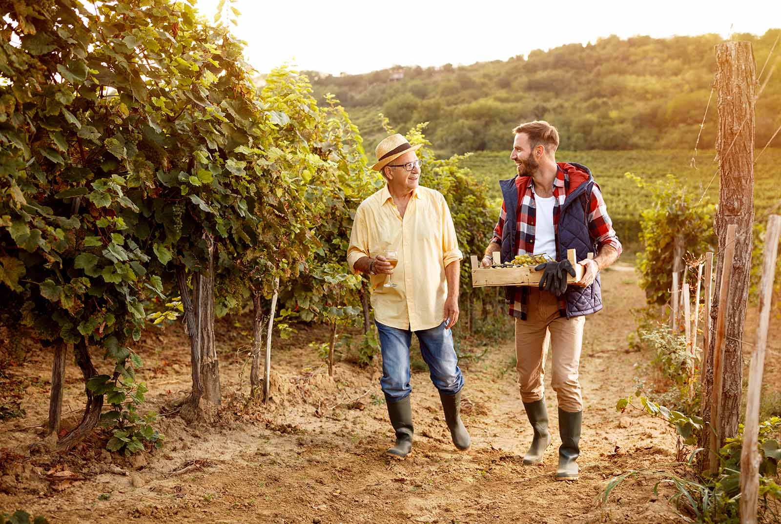 smiling winemaker father and son harvesting grapes
