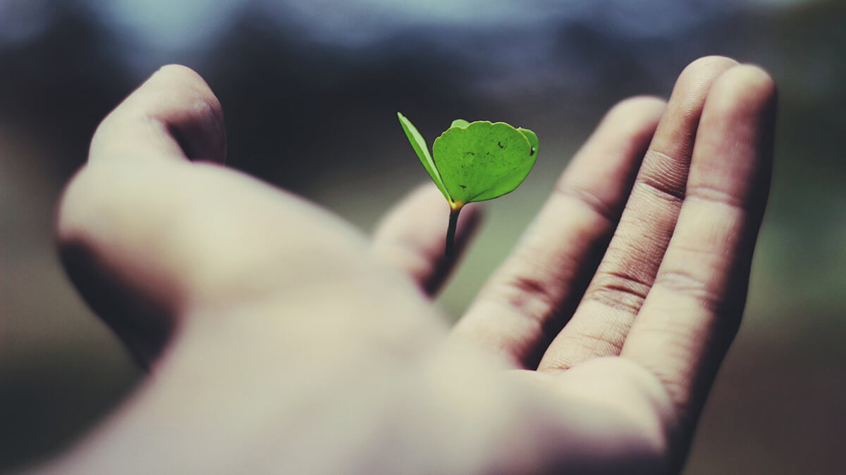 Floating green leaf plant on person's hand, ©Ravi Roshan / Unsplash